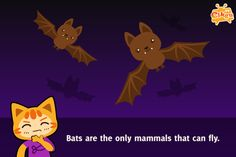 Fun Facts for #Kids #education 27 – Bats