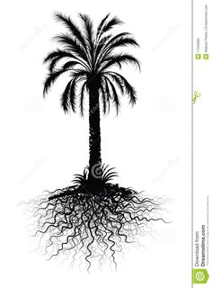 palm tree roots - Google Search