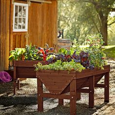"""Vegtrug Raised Beds $190-$270. V-shaped bed provides ideal growing conditions for a range of plants. FSC-certified sustainable Fir. Includes a fitted, breathable fabric liner for drainage.  Small: 39 1/2"""" x 30"""" x 31 1/2"""" high overall; 7 1/2 cu.-ft. cap.  Medium: 71"""" x 30"""" x 31 1/2"""" high overall; 14 1/2 cu.-ft. cap."""