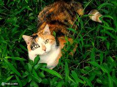 Ahhhhh! #cute #kitten #kitty #cat