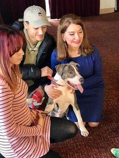 en directo: Condecoran un perro Pit Bull por salvarle la vida ...
