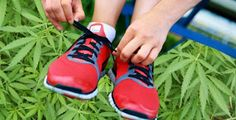 Zip 420: Getting High At The Gym