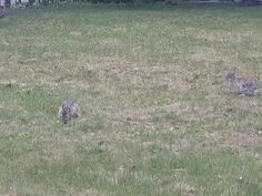 Bunny is looking for food, aother one appears and so on. Bunny, Videos, Animals, Food, Cute Bunny, Animales, Animaux, Essen, Animal