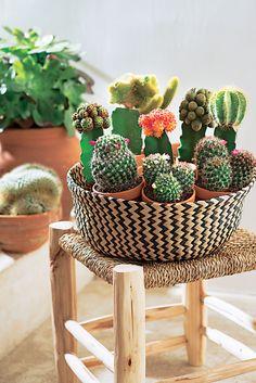 """"""" Dans la vie, il y a des #cactus... """" #Truffaut"""