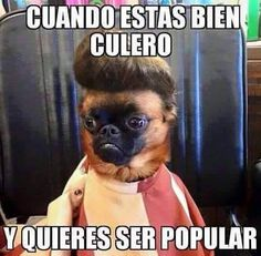 Memes divertidos: Quiere ser popular →  #memesdivertidos #memesenespañol…