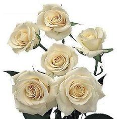 Ivory Cream Spray Roses Wholesale Flowers