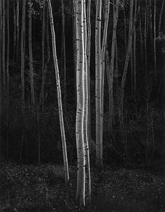 "Ansel Adams: Aspens. There are those who find Adams' work (especially his late reappraisals) operatic to the point of vulgarity.  To me they are like eating the world's best Christmas cake. Why does ""good taste"" or ""intelligent taste"" have to be mean, minimal, inhibited, paltry, austere? (SJ)"