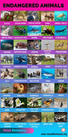 English Vocabulary Words, English Words, English Language, English Study, Learn English, Animals Name In English, Visual Dictionary, Endangered Species, Animal Species