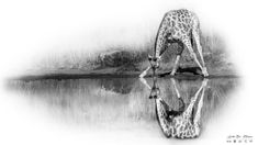 Andre Bosman - interview with a Fine Art Wildlife Photographer