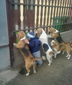 19 Fotos von Hunden und Kindern, die zusammen einfach wahnsinnig süß sind