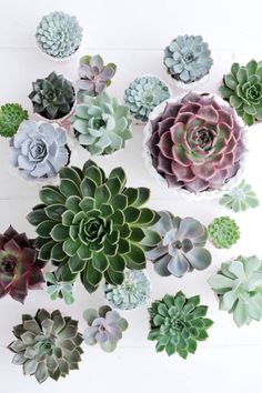 succulents for everywhere