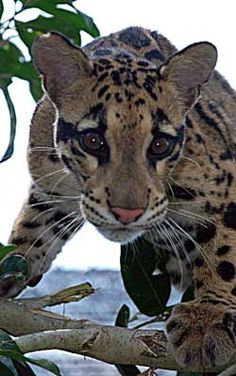 Image from http://www.cloudedleopard.org/images/help/web/help_home.jpg.