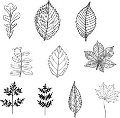free vector Black leaves vector ~ THE PİN Botanical Art, Botanical Illustration, Leaf Drawing, Black Leaves, Leaves Vector, Embroidery Patterns, Leaf Patterns, Autumn Art, Leaf Art