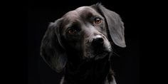 Depression: What Breed is Your Black Dog? The unwelcome pup looks different for everyone—and your particular form of depression can make a difference in choosing the best treatment options.
