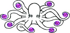 From JACS. The octopus grabbing Gd3+.