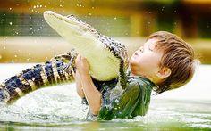 53 Best Always Alligators Images Alligators Crocodiles Animales