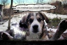 Modern Puppies - Potty Training a Puppy