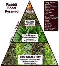 Bunny food pyramid