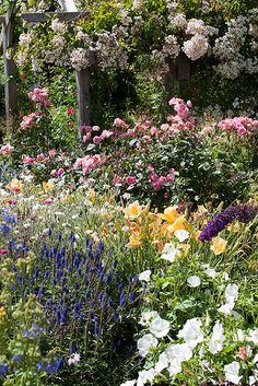 Rosemoor cottage garden, RHS Rosemoor Garden, Great Torrington, Devon, England, UK.