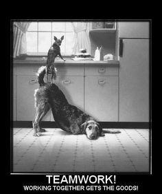 Google teamwork