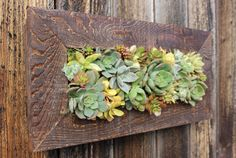 Indoor/Outdoor Living wall. 100 Handmade Cedar by OneWithPlants, $100.00