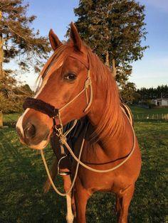 Cute Horses, Pretty Horses, Horse Love, Horse Photos, Horse Pictures, Cavalo Wallpaper, Funny Animals, Cute Animals, Most Beautiful Horses