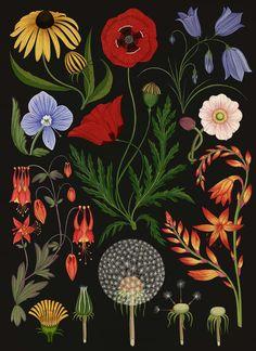 Botanicum - Wild Flower