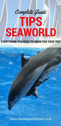 Top Tips for SeaWorld