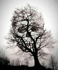 Skull tree...nature is awesome!
