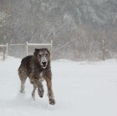 Running in the snow ...