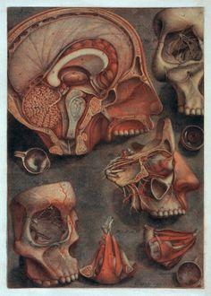 """Jacques Fabien Gautier d'Agoty - """"Antique Anatomical Illustrations"""" (four color mezzotint with hand painting), 1775"""