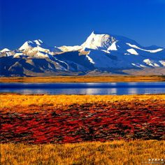 Tibet Beautiful World, Beautiful Places, Le Tibet, Great Places, Places To Visit, Nepal, Asia Travel, Beautiful Landscapes, Cool Pictures
