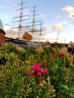 University Of Greenwich, Plants, Plant, Planets