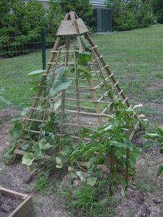 Idea for a cucumber trellis.  Love space saving garden ideas.