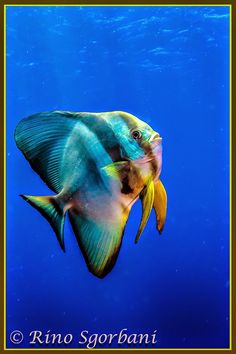 Reef fish by RINO SGORBANI