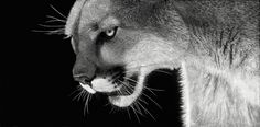 scratchboard art | ... of Animal Artists: The International Society of Scratchboard Artists