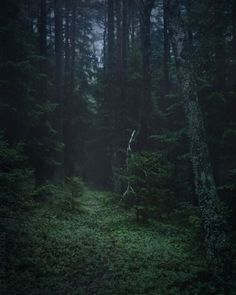 90377 Forest Fog by Rudolf Vlček Dark Green Aesthetic, Nature Aesthetic, Château Fort, Deep Forest, Magical Forest, Foggy Forest, Misty Forest, Slytherin Aesthetic, Dark Paradise