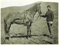 Comanche, U.S. Cavalry horse and survivor of The Little Big Horn.