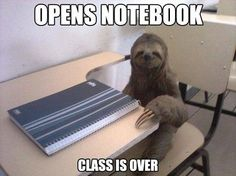 Meanwhile in sloth school