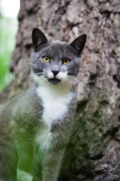 Stray cat in Redland