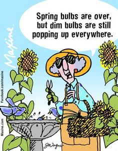 Dim Bulbs
