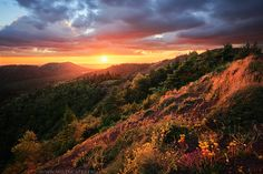 Beyond Forests and Volcanoes by MaximeCourty.deviantart.com on @deviantART