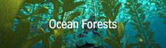 Crea y aprende con Laura: Ocean Forests y Amazing Amphibians! 2 para m. Apps, Amphibians, Forests, Amazing, Ocean, Science Vocabulary, Funny Science, Hilarious, Woodland Forest