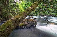 Little Qualicum Falls Campground, Vancouver Island, BC