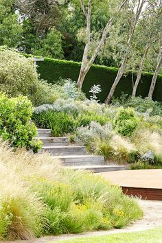Garden Landscaping Simple In the dry garden, natives such as Poa labillardieri, Lomandra longifolia, and coppiced Eucalyptus latens Moon Lagoon thrive. Australian Garden Design, Australian Native Garden, Modern Garden Design, Contemporary Garden, Garden Landscape Design, Bush Garden, Dry Garden, Garden Bed, Garden Edging