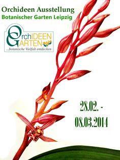 Orchid Exhibition at Leipzig Botanical Garden with Orchideengarten Karge www. orchideengarten.de