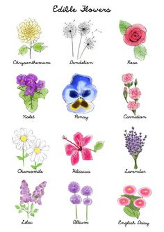 Easily identify edible flowers with the help of this graphic guide to edible flowers michellephan mightylinksfo