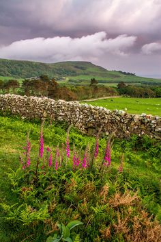 Llanfendigaid, Gwynedd, Wales by mikepickwellwildimages Beautiful World, Beautiful Places, Beautiful Pictures, Visit Wales, Wanderlust, British Countryside, Snowdonia, England And Scotland, Places Of Interest