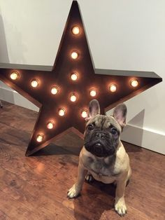 Ace is loving his new Broadway Floor Lamp. Cute. See inside more of our customers' inspiring homes on MADE.COM/Unboxed.