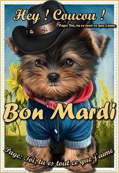 bon mardi humour - Recherche Google Bon Mardi Humour, French Flashcards, Tuesday Humor, Bon Weekend, Happy Tuesday, Good Morning, Teddy Bear, Christian, Facebook